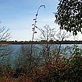 Lac Arjuzanx 05021640