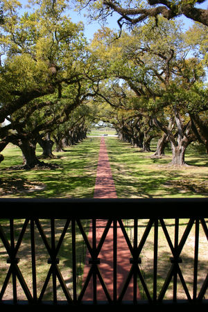 Louisiana_Oak_Alley_23