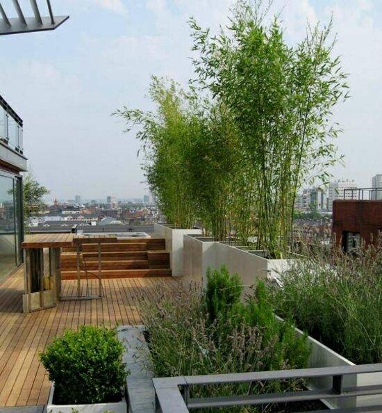 bambou-planté-jardinières-balcon-paravent-naturel