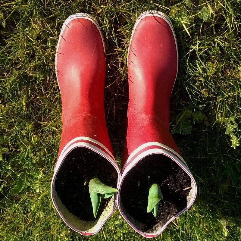 diy-des-tulipes-dans-mes-bottes