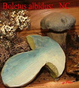 bol_alb