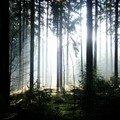 westweg... forêt de lumière