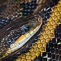 python beauval2