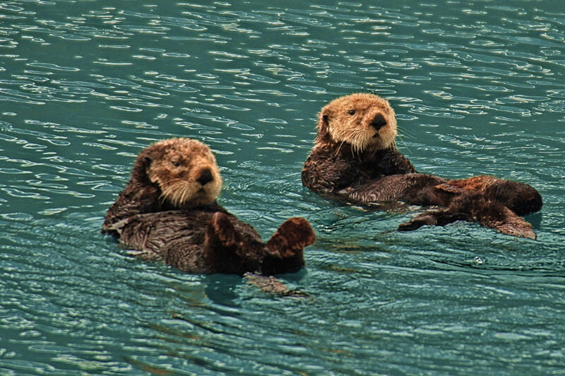 Sea_Otters