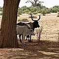 Sénégal (52)
