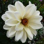 fleur_trianon_7