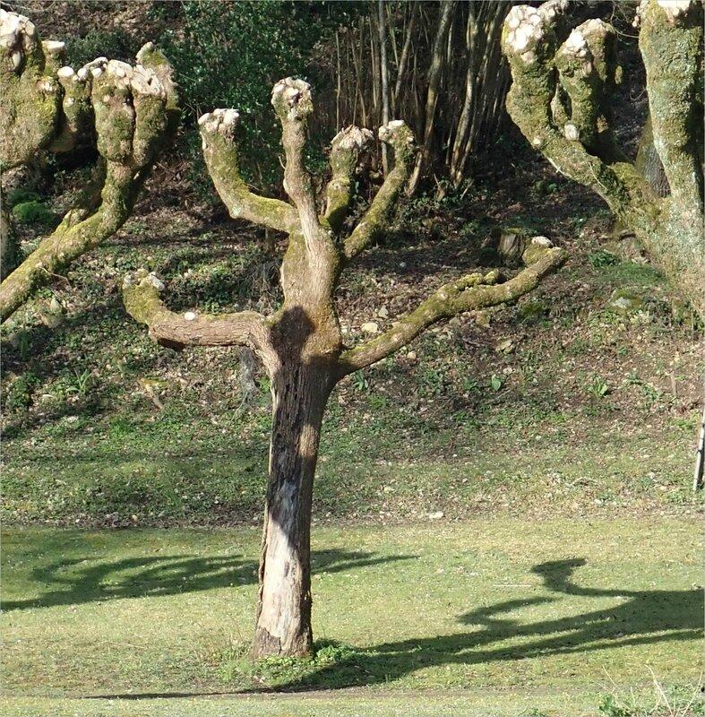 arbres danse 032018