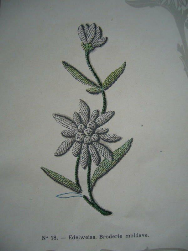 edelweiss. Broderie au passé.