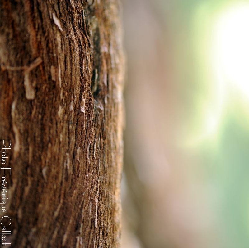 arboretum_aout_2010_131
