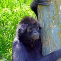 2008_0510anniNelly0055_edited