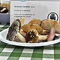 Russula amoena