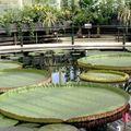 Kew garden 8