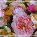 Flor de canarias
