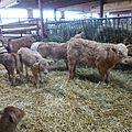 Paysans du bugey : de la ferme à l'assiette