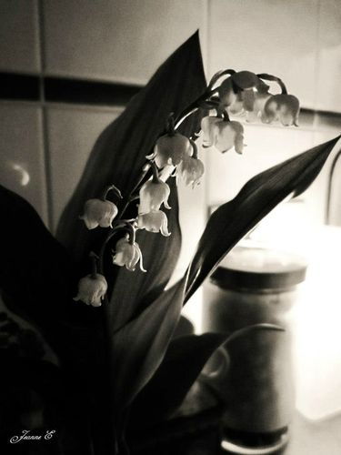 Or des vergers fleuris se figeaient en arrière les pétales tombées des cerisiers de mai