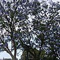 L'arbre aux fleurs bleues