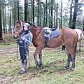 Balade à cheval dans la forêt P1080220