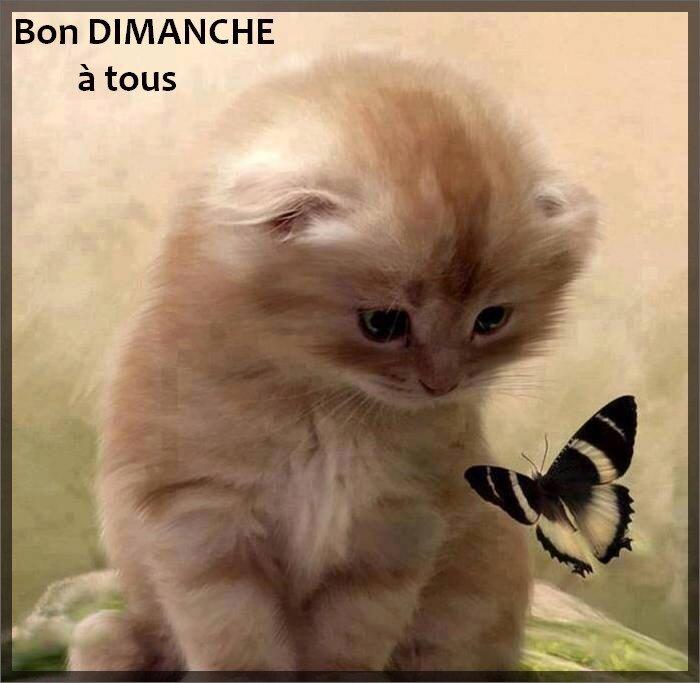 DIMANCHE__3_