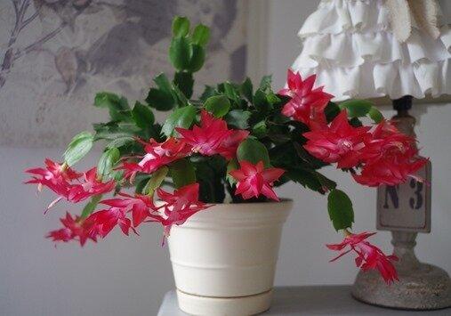 fleurs maison 2