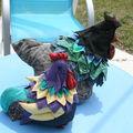 Mon coq et sa poule
