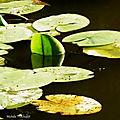 1-Balade au Lac et jardin Colette 180718