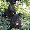 Louna et Linou 1 - 2 chiots jetés ds la forêt qui sert de décharge