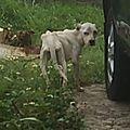 Hery - pauvre chienne sur pap - un vrai cadavre sur pattes - avril 2018