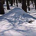 Paysage Hautes-Alpes Troncs mélèzes ombres sur la neige SuperDevoluy