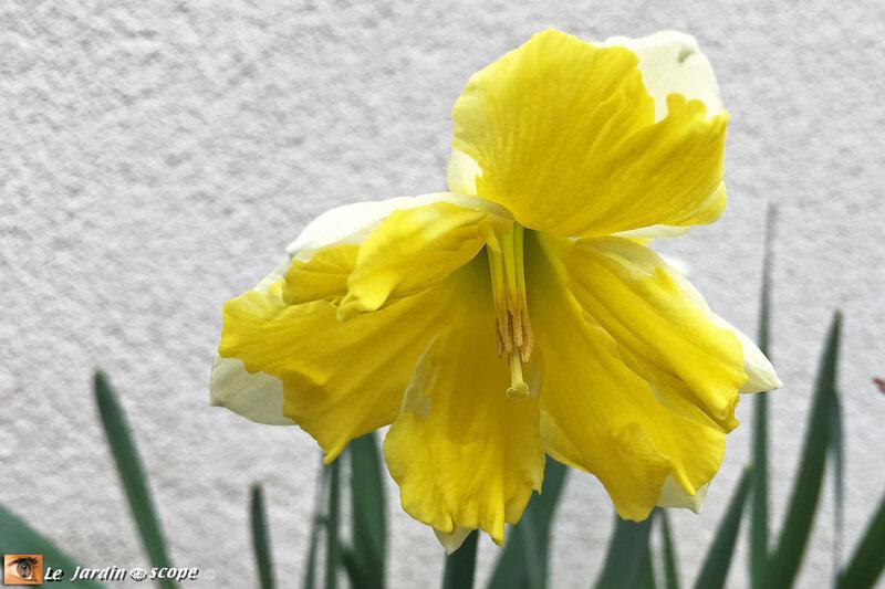 Narcisse-Belcanto