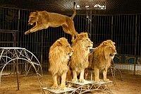les_lions