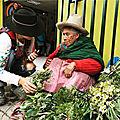Préserver la richesse ancestrale des plantes médicinales de la cordillère des andes