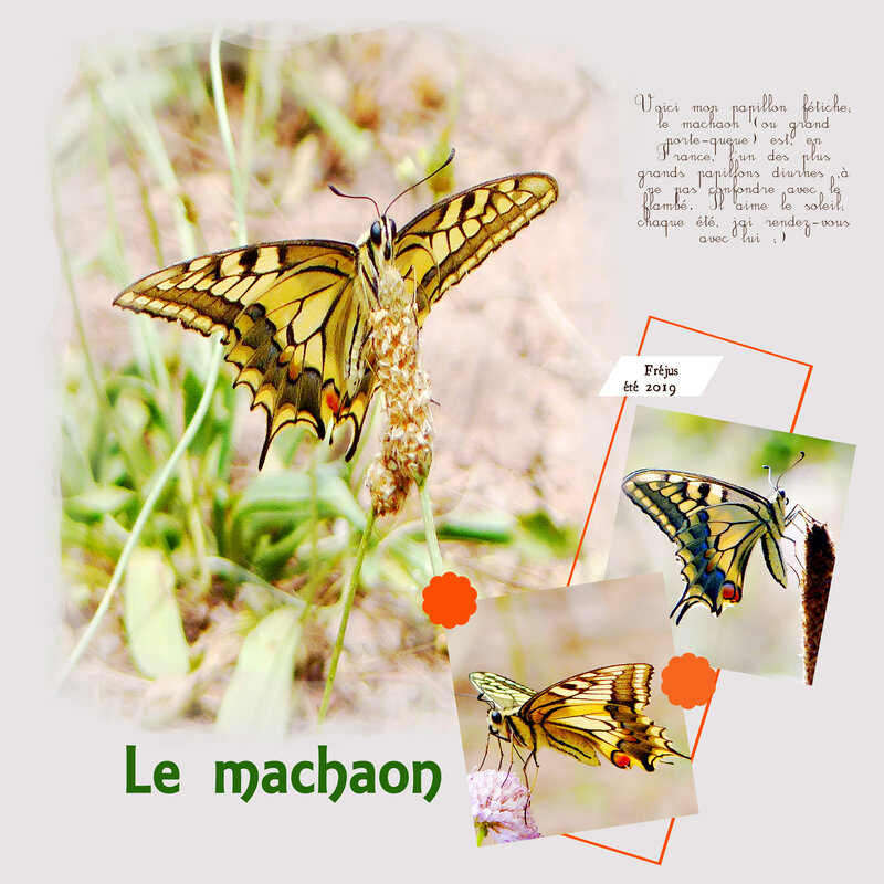 Machaon---Template-4-lady22