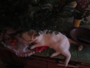 Noel de Frodon