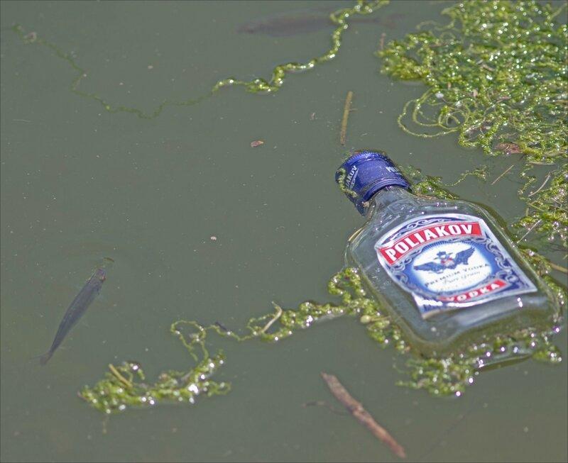 ville bouteille rivière poissons 080717 3