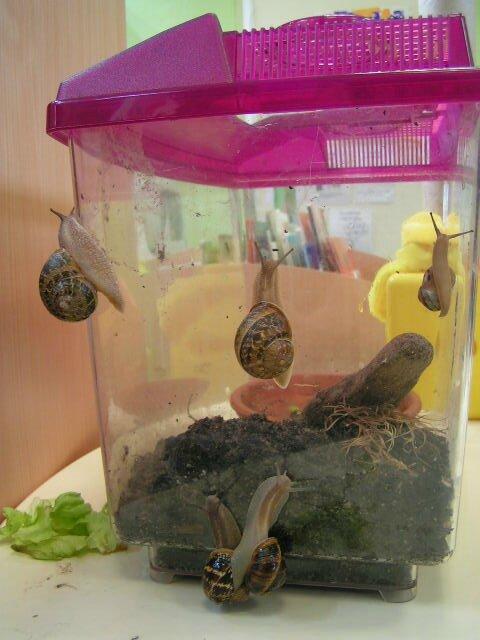 escargots 2009 (16)