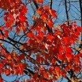 Couleurs d'automnes