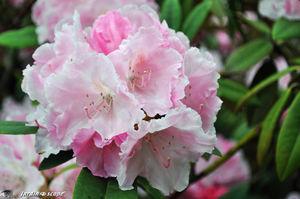 Jardins_de_callunes_0122