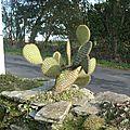grand cactus
