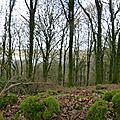 Balade à cheval dans la forêt P1080286