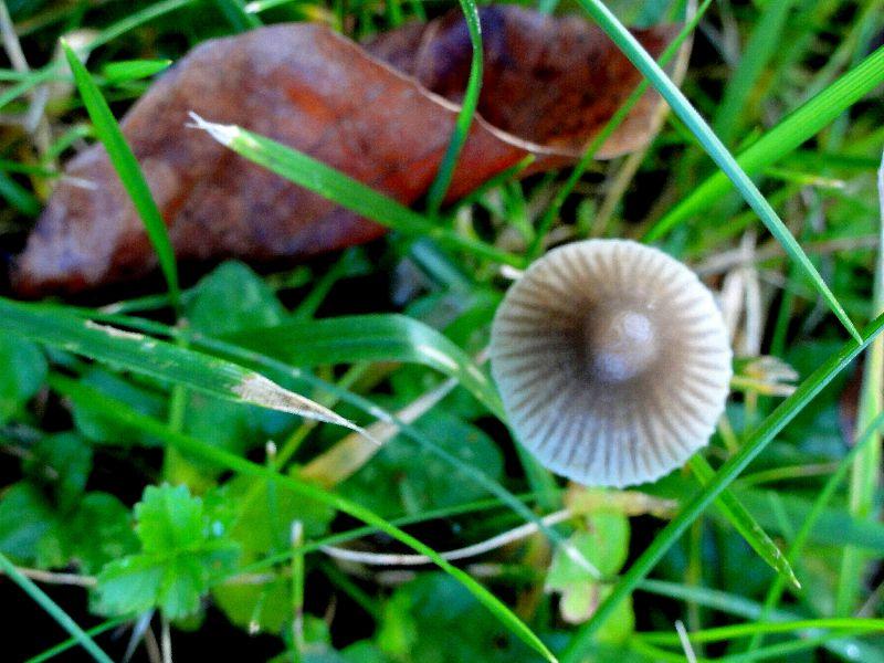 champignon-05727
