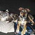 Iska et le chat