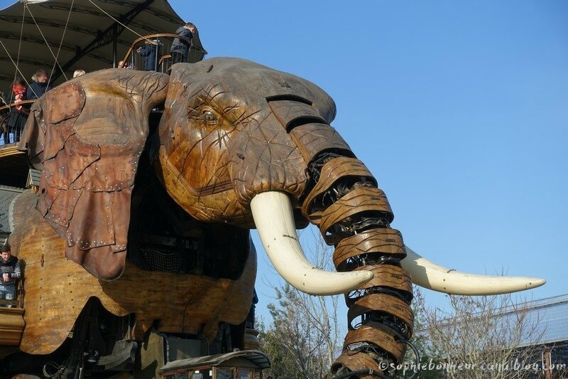 chantiers éléphant tête