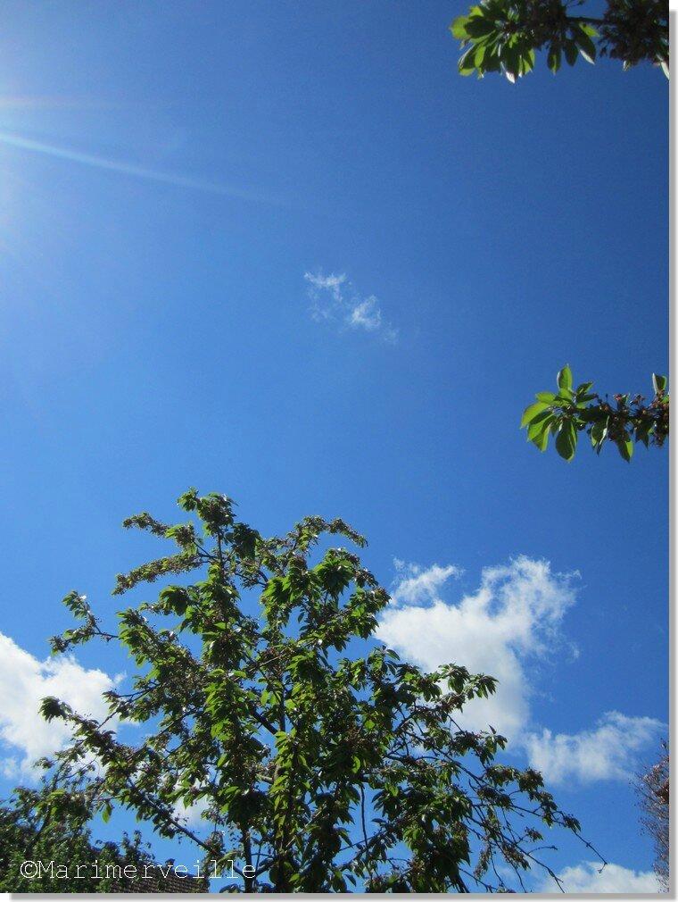 ciel bleu myosotis