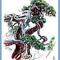 Taïwan, juniper.