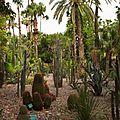 M62 - jardins Majorelle