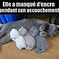 Douceur animale...