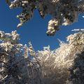2009 11 11 Le Pic du Lizieux, une matinée ensoleillé sous le givre (13)