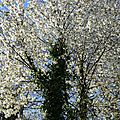 Images du printemps...