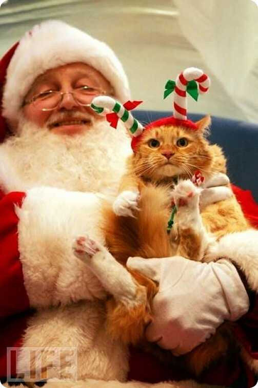 pere_noel_chat