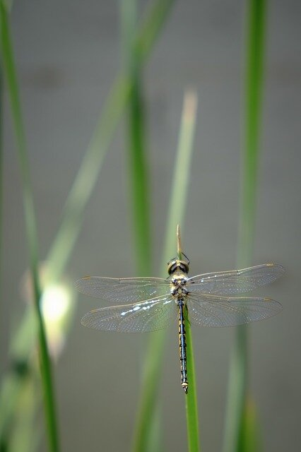 dragonfly-267805_640